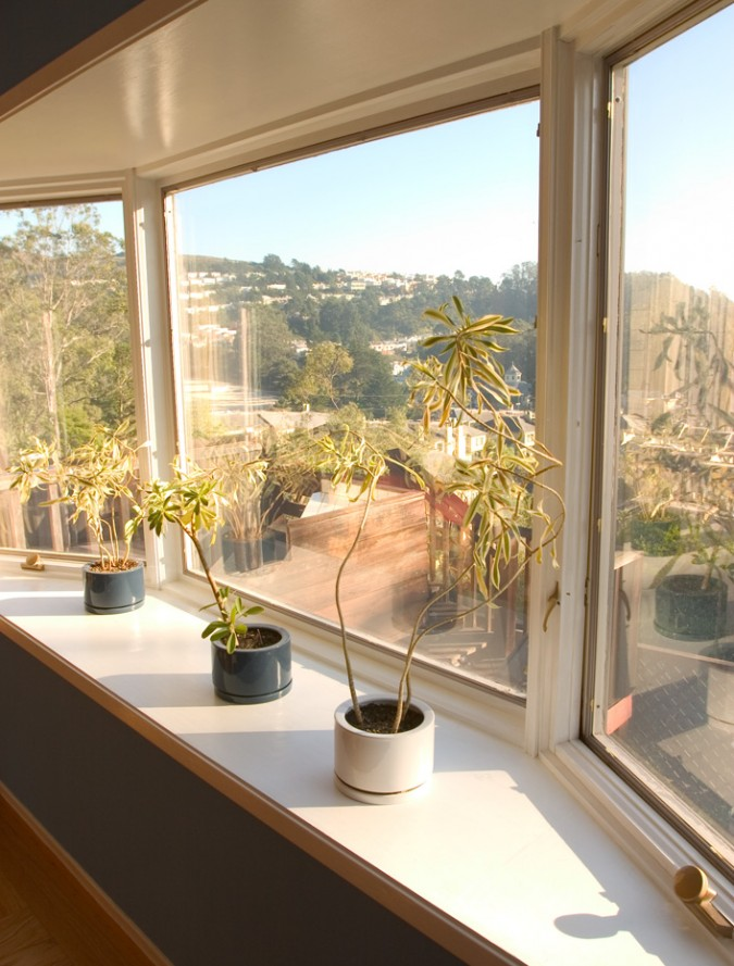 plants in bay window