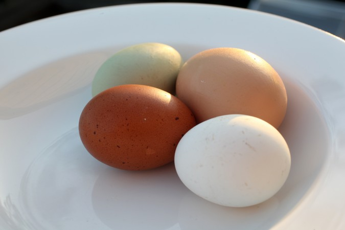 White brown and green chicken eggs from hens kept by Kevin Warnock